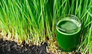 Суперфуды: защита молодости и кладезь витаминов - 6